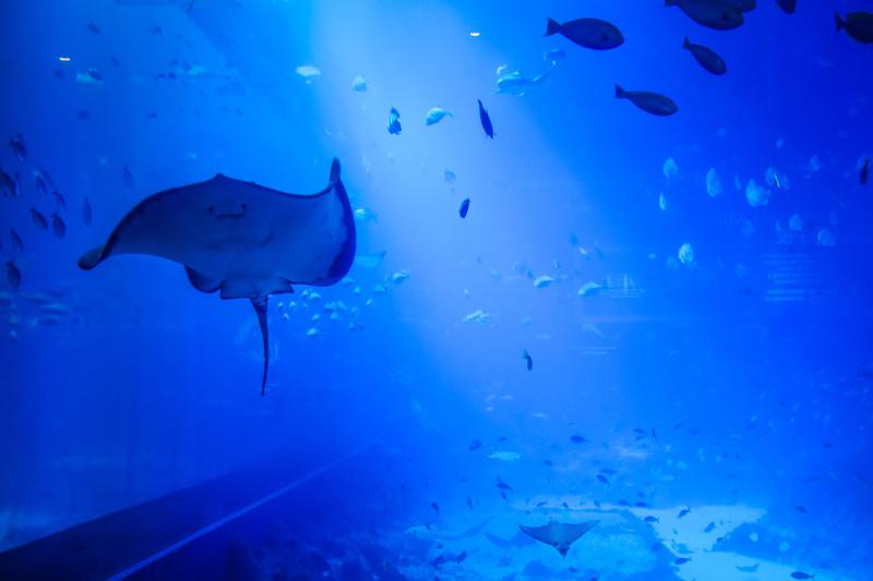 Taken at SEA Aquarium Singapore
